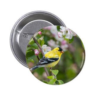 Goldfinch americano con los flores de la manzana pin redondo 5 cm
