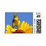 Goldfinch americano en el girasol sellos