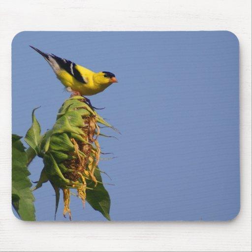Goldfinch americano en el girasol tapete de raton