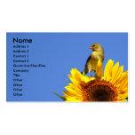 Goldfinch americano en el girasol tarjeta de visita