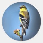 Goldfinch americano etiqueta redonda