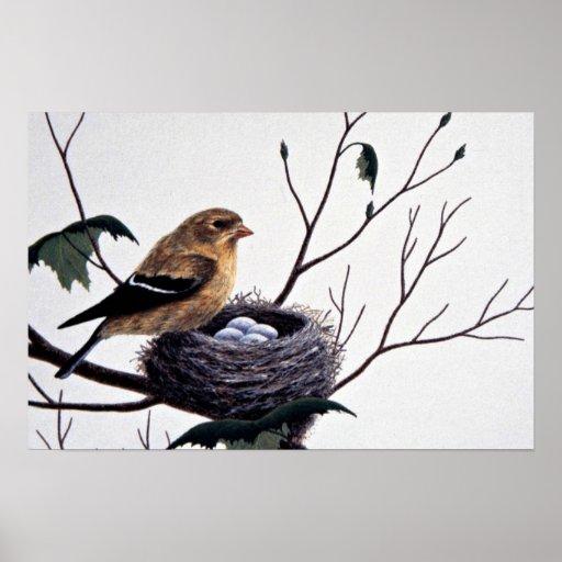 Goldfinch americano (femenino) posters