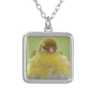Goldfinch americano joyeria