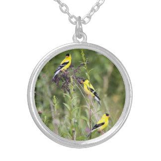 Goldfinch americano joyerias personalizadas