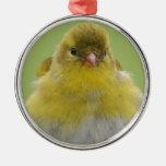 Goldfinch americano ornamento para reyes magos