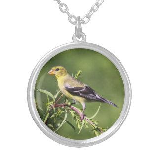 Goldfinch americano pendientes