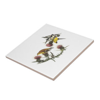 Goldfinch americano por Audubon Azulejo Cuadrado Pequeño