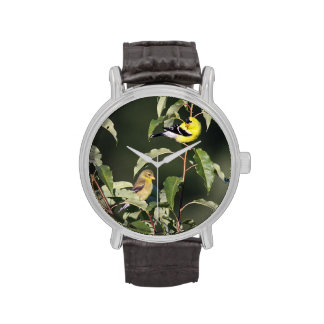 Goldfinch americano relojes