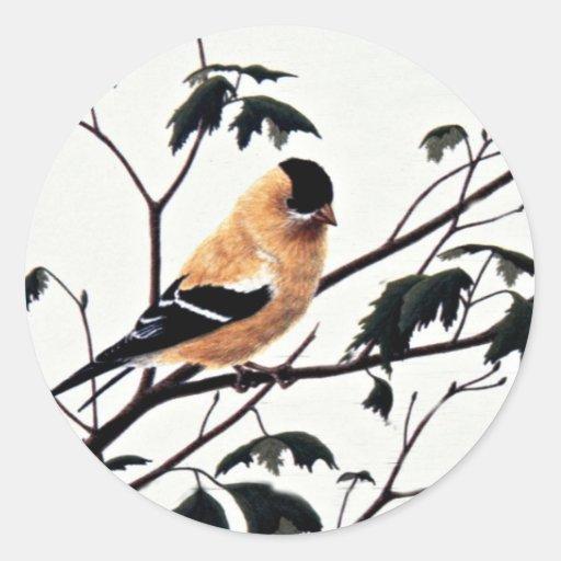 Goldfinch americano (varón) pegatina redonda