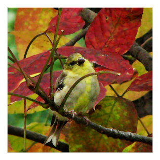 Goldfinch and Autumn Leaves Print