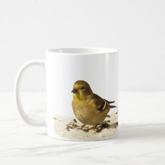 Goldfinch and Pine Siskin
