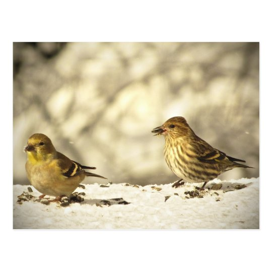 Goldfinch and Pine Siskin Postcard