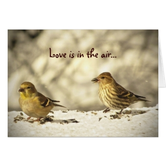 Goldfinch and Pine Siskin Valentines Day