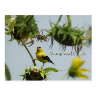 Goldfinch and Sunflower Seed Postcard