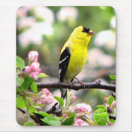 Goldfinch Bird and Pink Flowers Mousepad