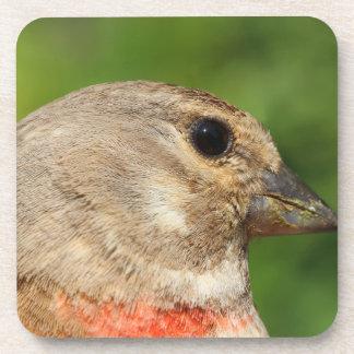Goldfinch bird portrait coaster