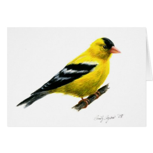 Goldfinch by Cindy Agan Greeting Cards
