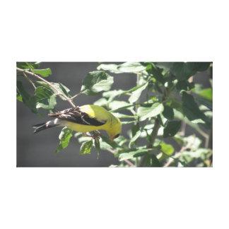 Goldfinch Canvas Print