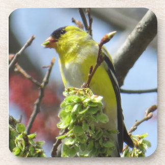 Goldfinch Coaster