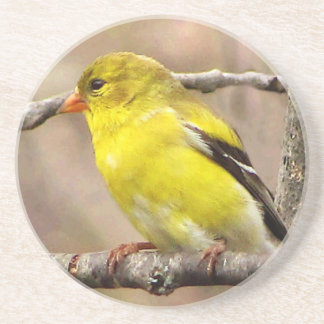 Goldfinch Drink Coasters