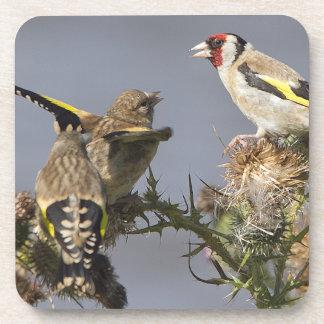 Goldfinch Cork Coaster
