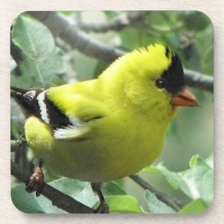 Goldfinch Cork Coasters