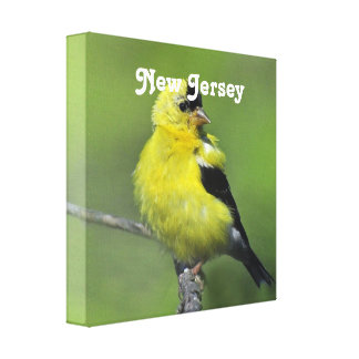 Goldfinch de New Jersey Impresiones En Lona