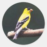 Goldfinch en una rama de árbol pegatina redonda
