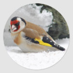 Goldfinch europeo en pegatinas de la nieve etiqueta redonda