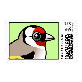 Goldfinch europeo