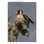 Goldfinch Felicitacion