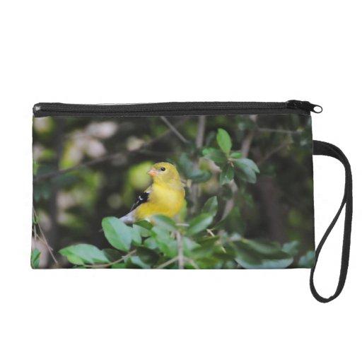 Goldfinch femenino