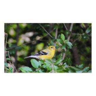 Goldfinch femenino 2 tarjetas de visita