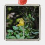 Goldfinch femenino adornos