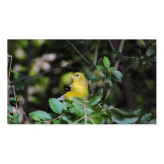 Goldfinch femenino tarjetas de visita