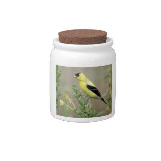 Goldfinch Jarra Para Caramelo