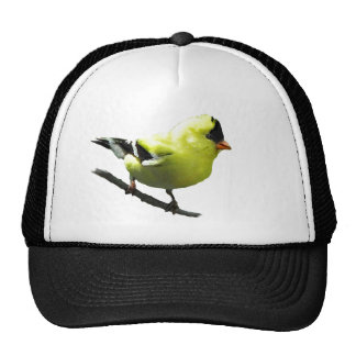 Goldfinch hat