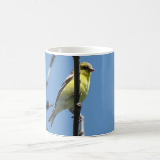 Goldfinch in a tree coffee mugs