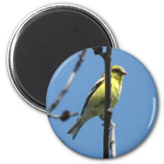 Goldfinch in a tree magnet