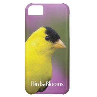 Goldfinch iPhone 5C Cover