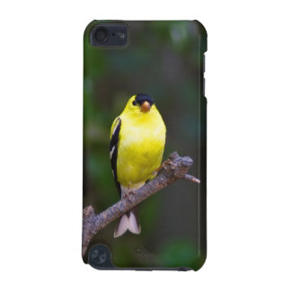 Goldfinch iPod Touch 5g case