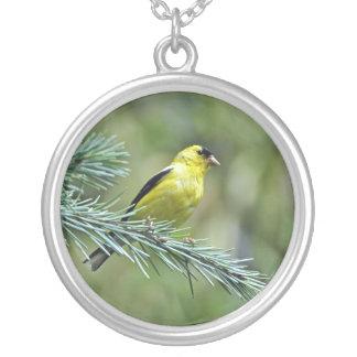 Goldfinch Joyeria