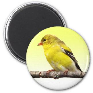Goldfinch 2 Inch Round Magnet