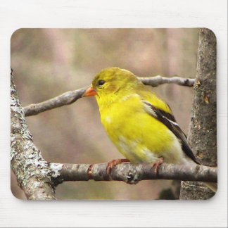Goldfinch Mouse Pad