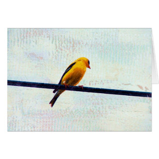 Goldfinch on a Power Line Card