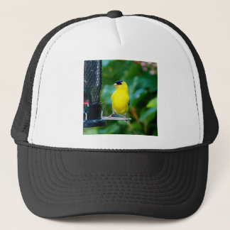 Goldfinch on feeder trucker hat