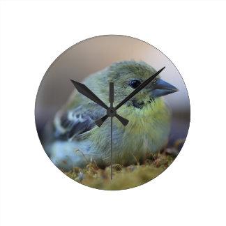 Goldfinch on moss round clock