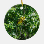 Goldfinch Ornamentos De Reyes Magos