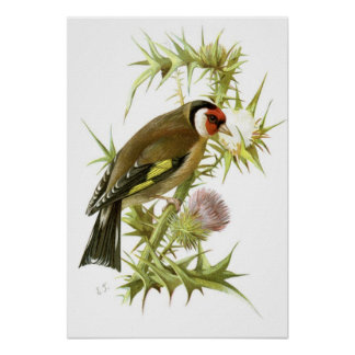 Goldfinch Posters