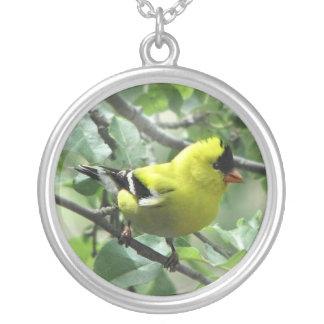 Goldfinch Pendiente Personalizado